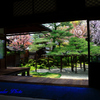四季京艶 春