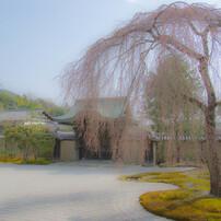 高台寺の庭