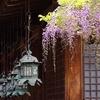 藤と釣灯籠