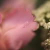 レトロな花