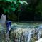 オオルリ水浴び(4)802