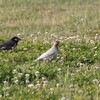 身近にいる野鳥達 その4