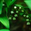マイナーな場所に咲く春の花