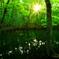 森の夜明け III
