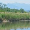 鳥のいる風景 カンムリカイツブリ