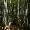 竹林のランウェイ