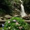 紫陽花と見帰りの滝