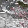 但馬國 春の雪 梅と出石城