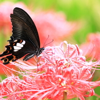 A flower and butterfly.