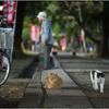 「とおりゃんせ」 小江戸川越散歩95