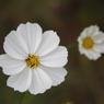 花 その2