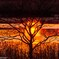 夕刻に燃える樹