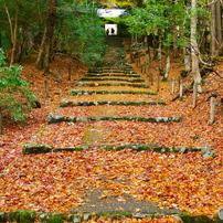 2015関西の秋(京都 滋賀)