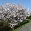 冨士山(とみすやま)公園の桜-4