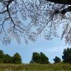 冨士山(とみすやま)公園の桜-9