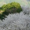 冨士山(とみすやま)公園の桜-12