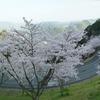 冨士山(とみすやま)公園の桜-13
