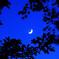 月明りのモミジ