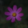花 その3