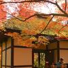 秋色に染まる山寺
