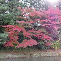 京都・金沢の秋景色