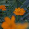 花 その4