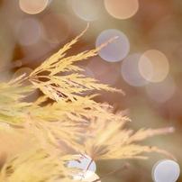 光と戯れるレンズが魅せる世界