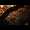 秋のぶらり京都 03
