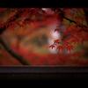 秋のぶらり京都 04