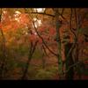 秋のぶらり京都 05