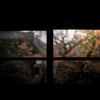 秋のぶらり京都 11