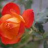 花 その5