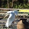 猛禽類写真館4