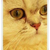 猫カフェ②
