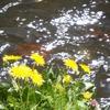 春の小川のイメージ?
