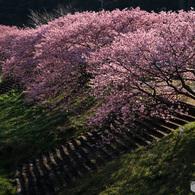 春の朝 -125T