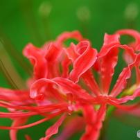 四季の花 秋