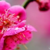 四季の花 春