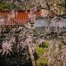 山寺の春 Ⅱ