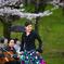 桜祭りのフラメンコ1