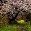 Spring promenade