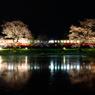 夜桜小湊鉄道