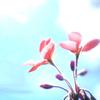Flower-Petal-Stamen-Pistil-Stem-Macro-Pl