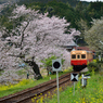 桜キハ200系①