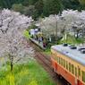 桜キハ200系③