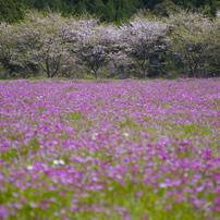 春の原風景