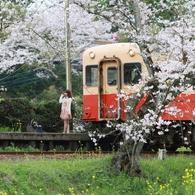 桜キハ200系⑦