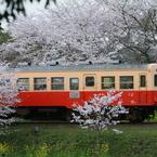 桜キハ200系⑪