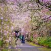 Spring memory 2016