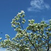 青空 白花